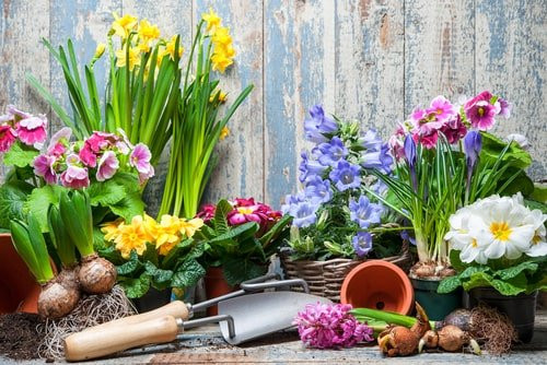Spring Landscaping to Boost Rental Property Curb Appeal