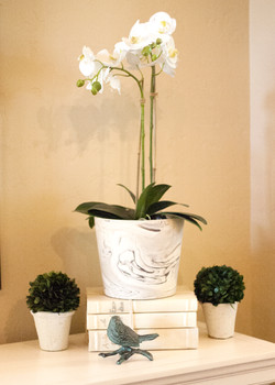 Orchid with boxwoods
