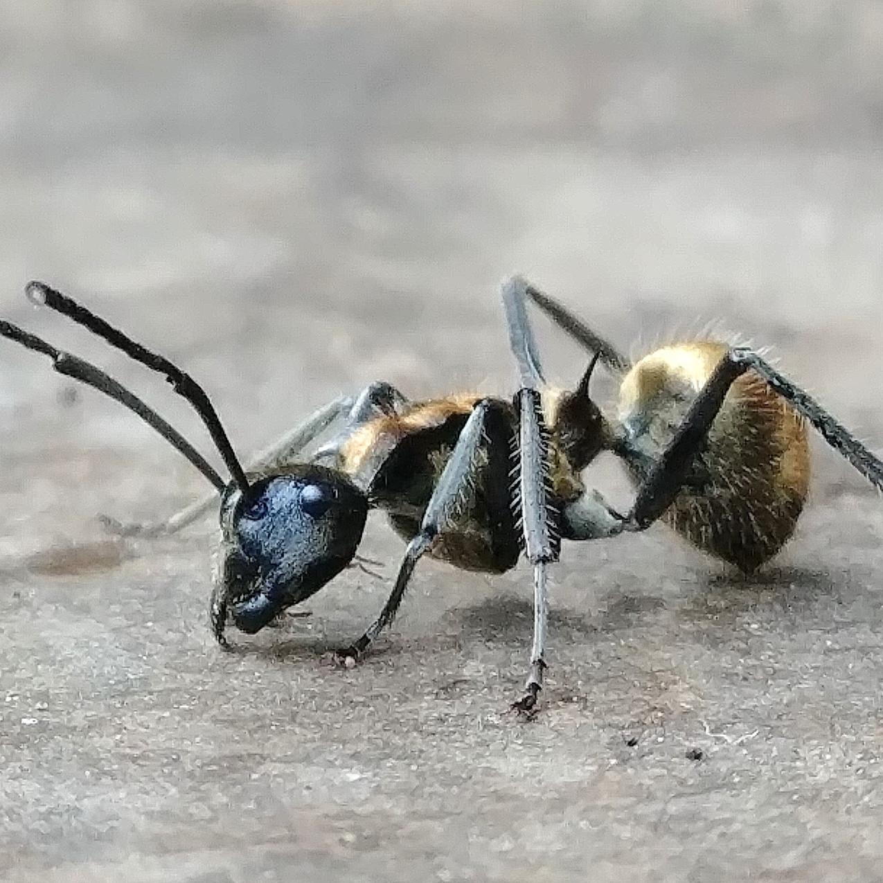 Observation des fourmis!