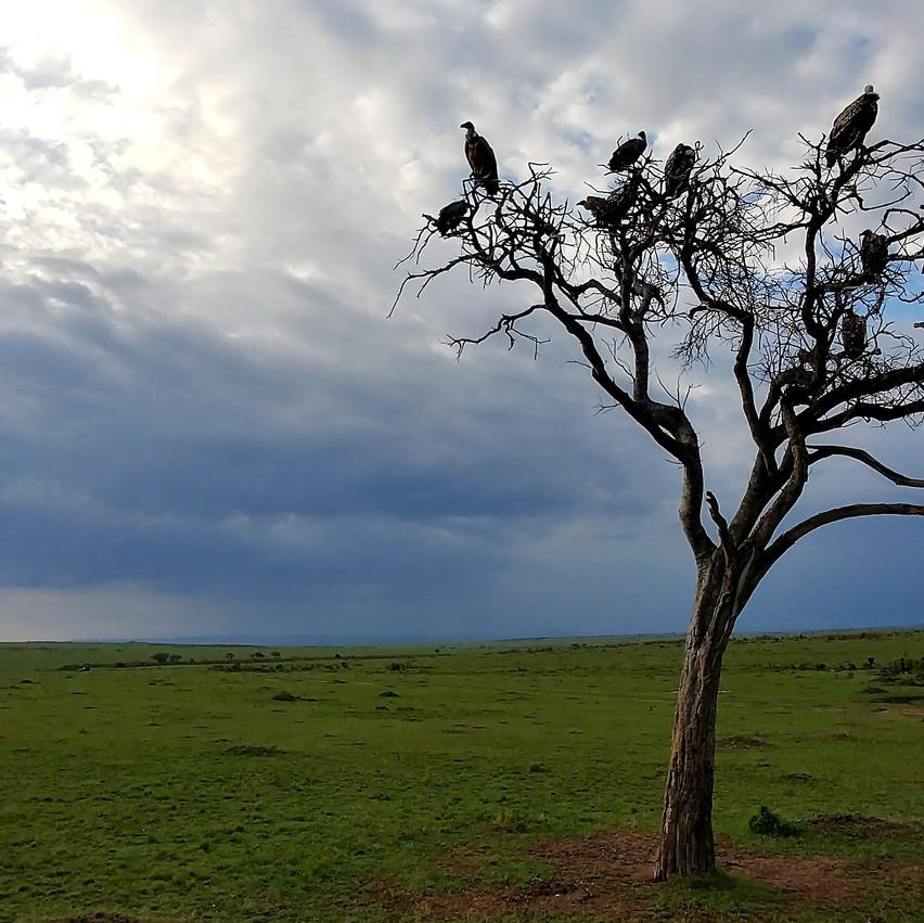 Les vautours attendent