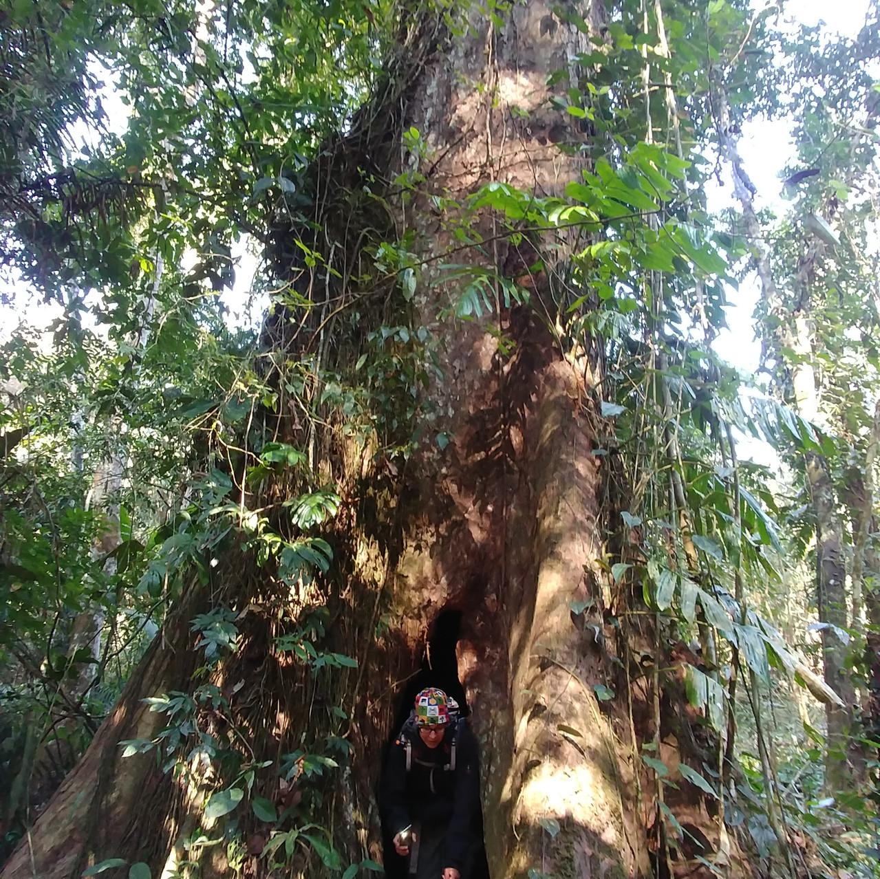 A cache-cache dans les arbres