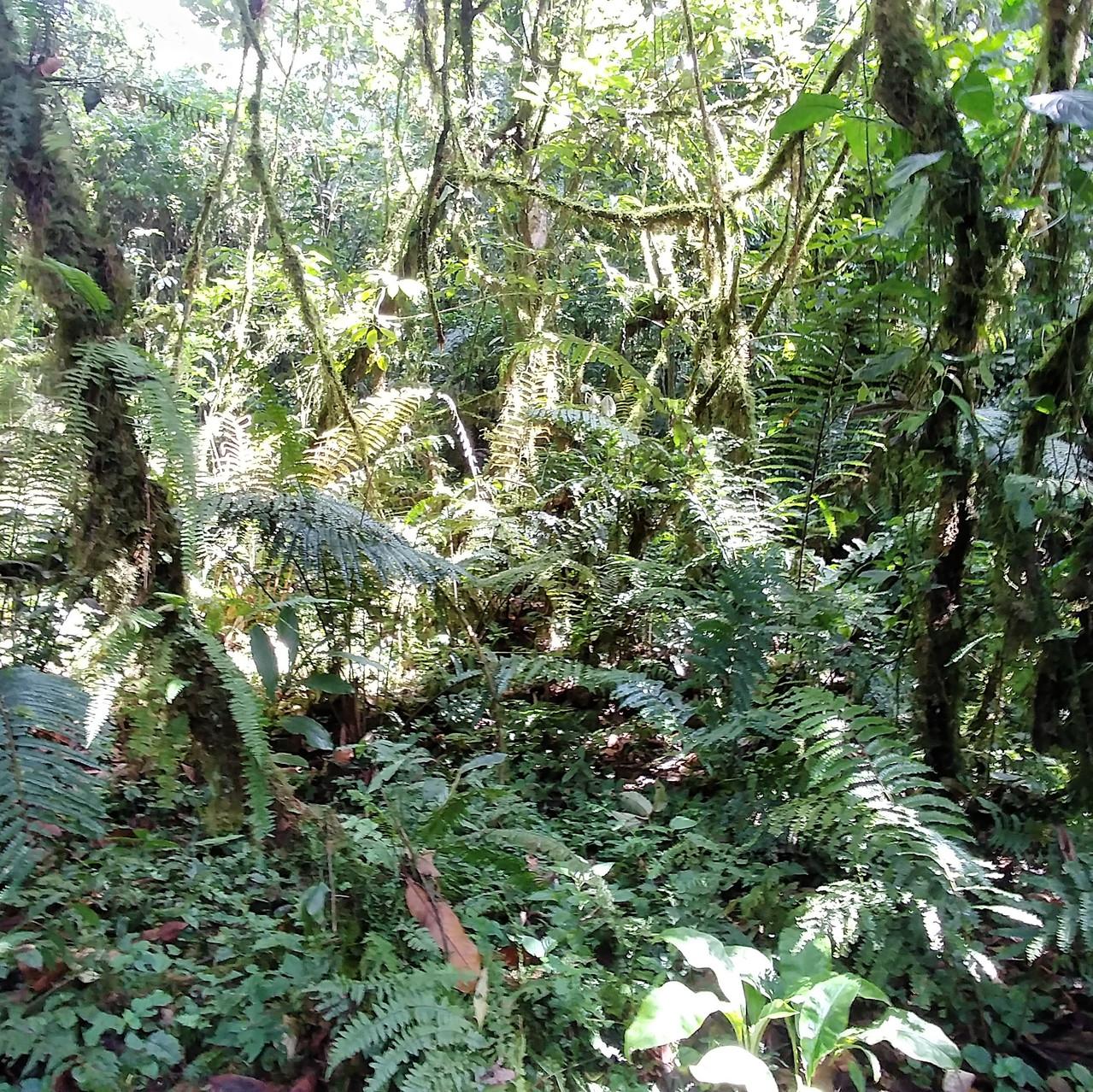 Forêt - parc Bwindi