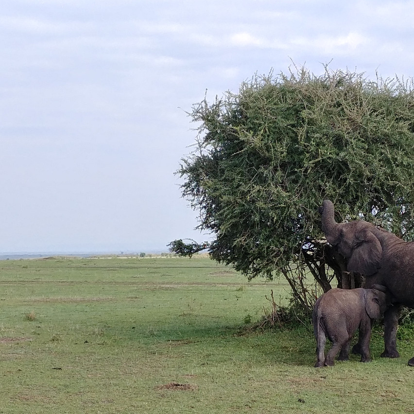 Eléphant et son petit