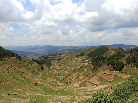 Green Uganda!