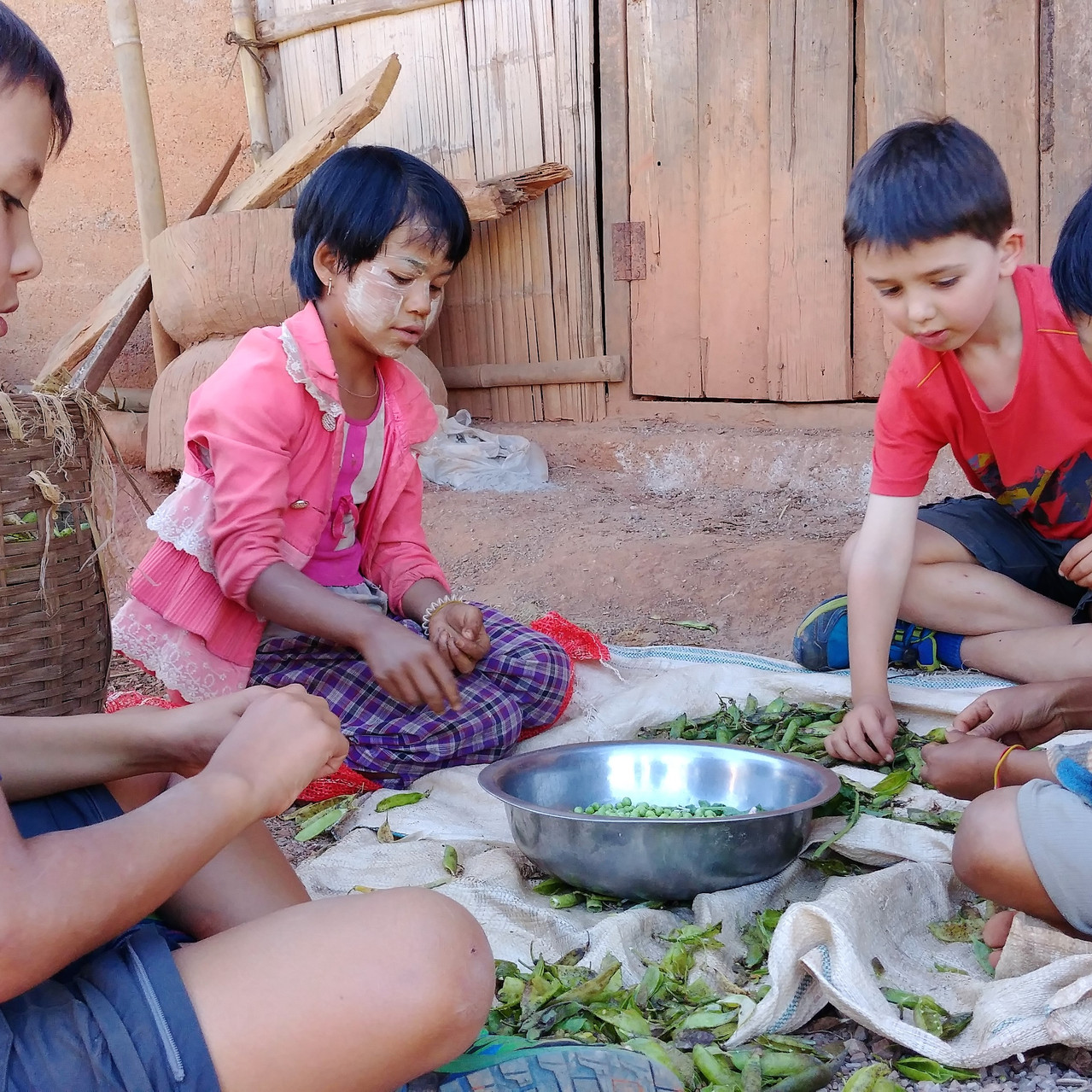 Atelier épluchage des haricots