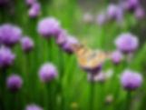 single butterfly_edited.jpg