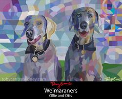 Ollie & Otis Weimaraners