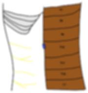 TAP block anatomy