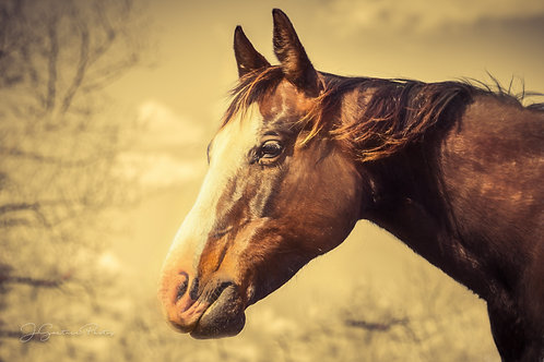 Beautiful brown mare's head with blurred background.
