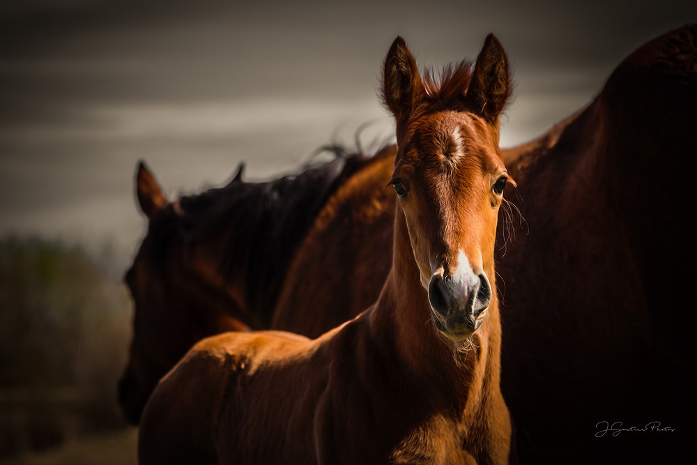 New foal with mom