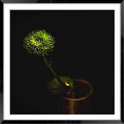 Green flower resting in a copper mug with black background.