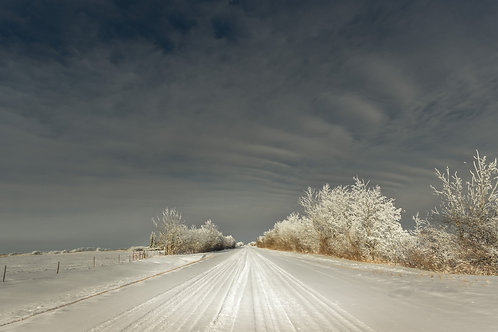 Winter back road on the Saskatchewan Prairies with frost covered trees along the side.