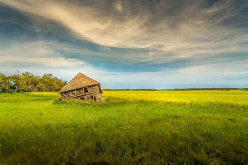 Abandoned house collapsing beside a canola field in the summer with swirly clouds in the sky