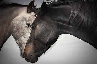 Black and Gray-1.jpg