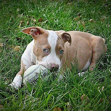 Happy National Dog Day!!!