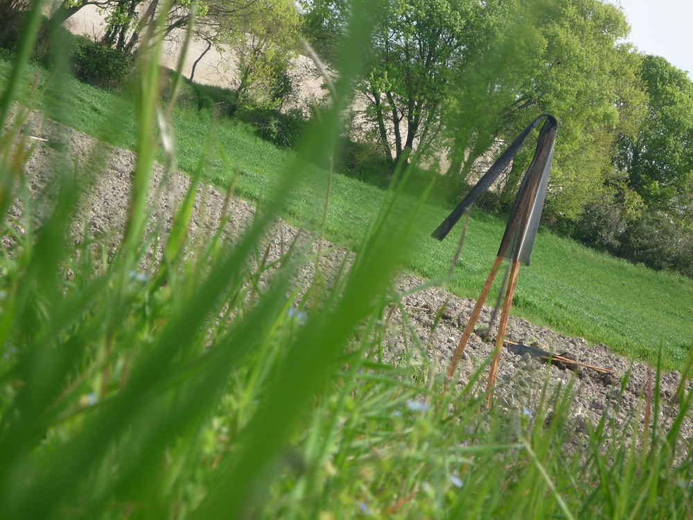 Chez Madame COUTURE, plantation in extremis, au tout début du confinement, dernier délais des plantations !