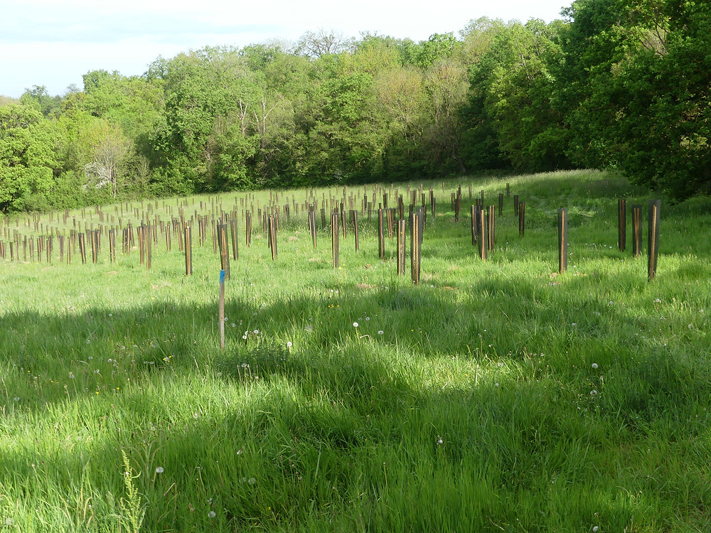 Plantation du nouveau bois d'Alvignac les Eaux pendant le confinement ! Bientôt une inauguration avec la pose d'un panneau explicatif.
