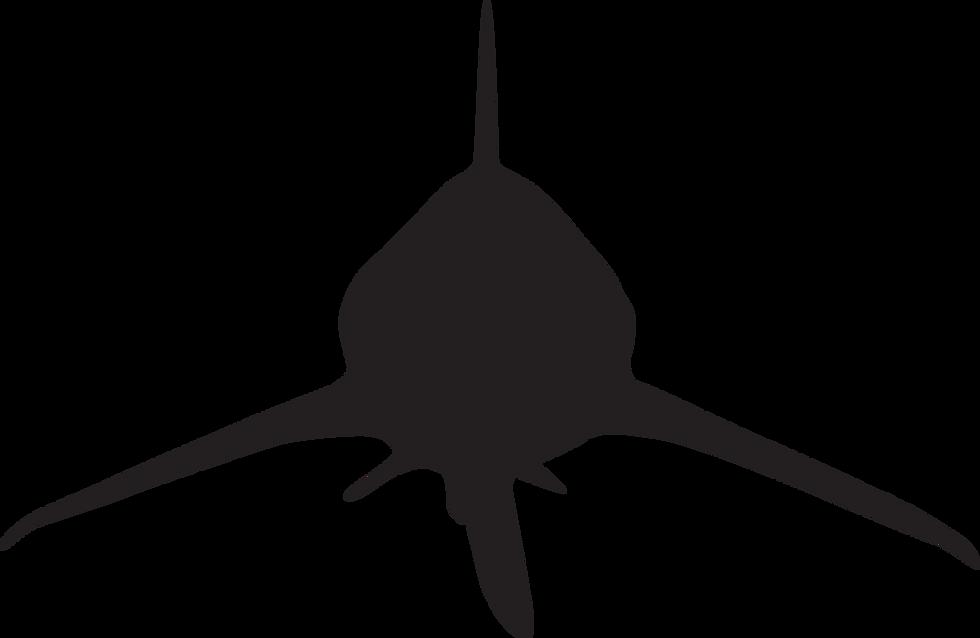 Shark Tooth Hunting