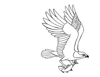 osprey fising coloring page