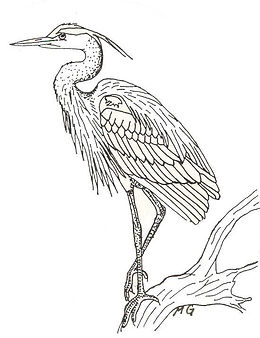 Blue Heron Coloring Page