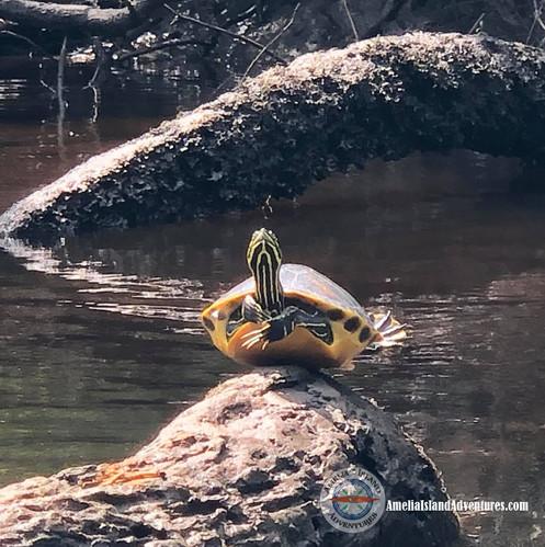 Eco Easy Self-Guided Kayak Tour