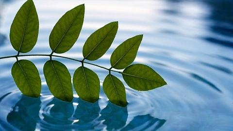 peaceful-leaf-500x.jpg