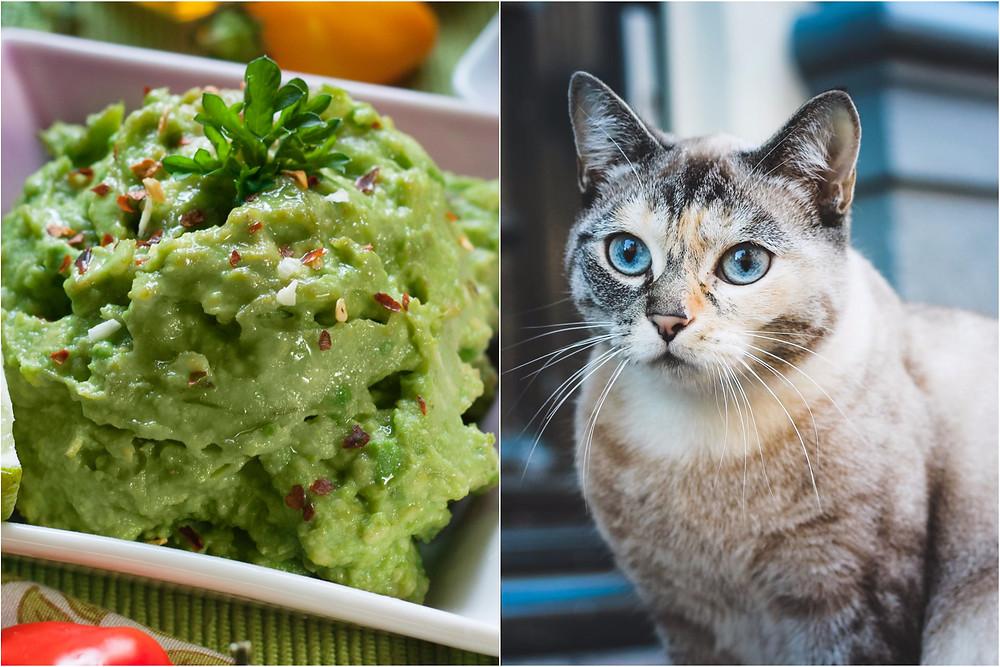 Een Google algortime was 100% zeker dat een foto van een kat guacamole was