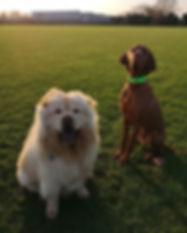 Fluff and ginge. #potterspaws_#dogwalker