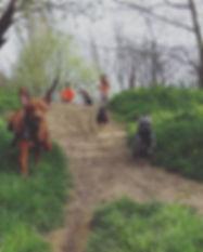 Come! ••_••_••_#potterspaws_#dogwalker #