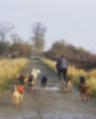 Biking with 9 dogs today _) #potterspaws
