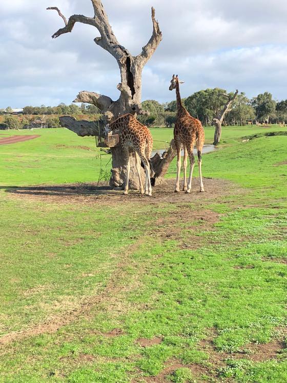 Year Three On Safari