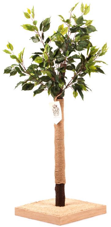 Дерево-когтеточка