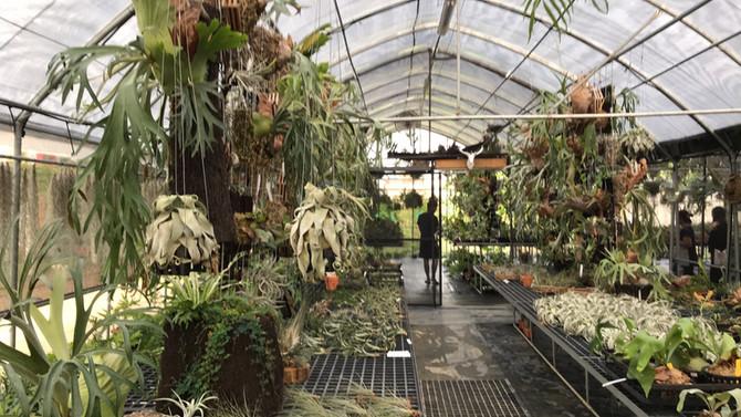 來幫秘密花園增添些新朋友🤩喜歡收集鹿角蕨的朋友非常推薦來台南這家,價格實在,品種非常齊全喔!🤩🤩#鹿角蕨控 #家裏需要佈置像秘密花園🍃🌿🍁🌺🍄🎍
