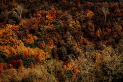 Colors of Autumn _ Korea