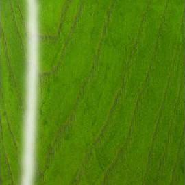 Emeraude Green Transparent High Polish Ash