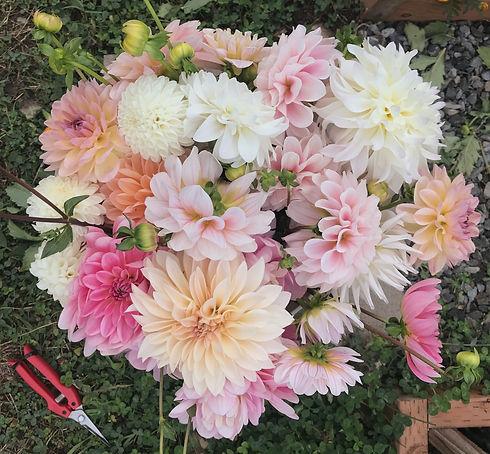 Bucket of Dahlia Flowers
