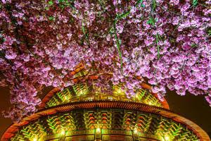 全新生活[星空花語]台灣攝影&東洋花藝展覽