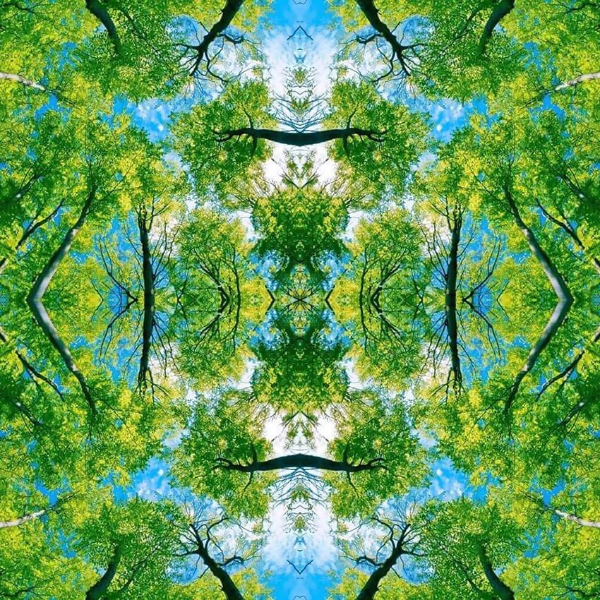 geometree I