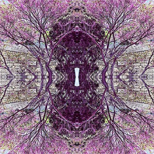 geometree XX