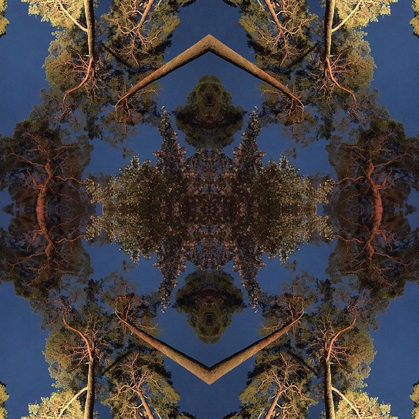geometree XXXI
