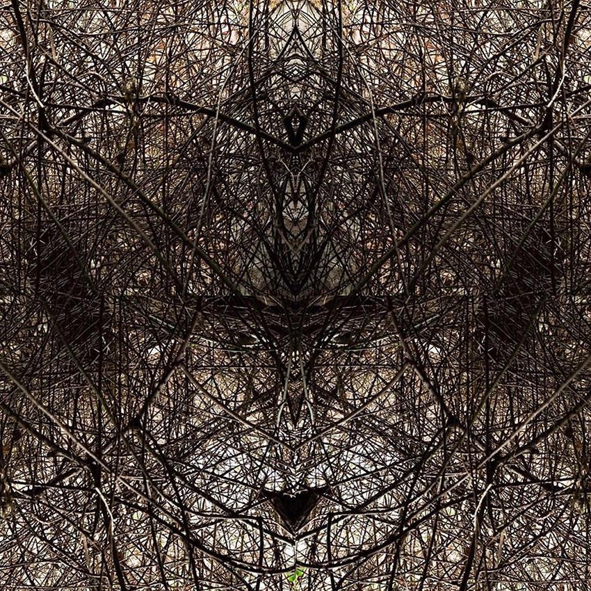 geometree XXIV