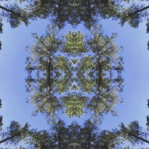 geometree XXVI