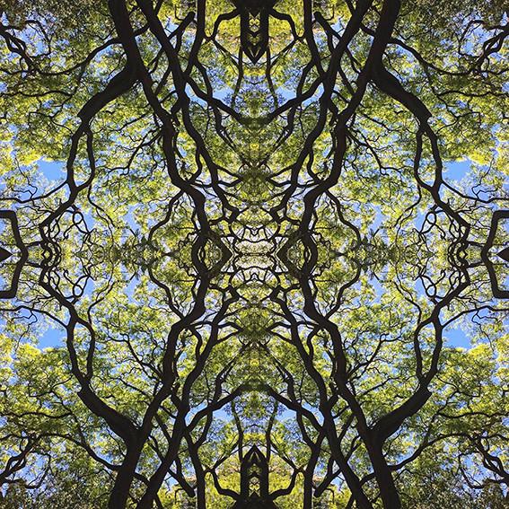geometree XV