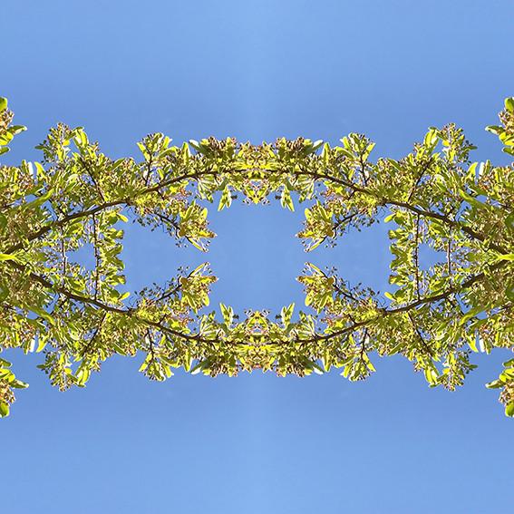 geometree II