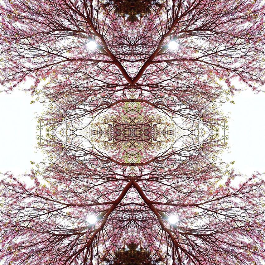 geometree XXXIII