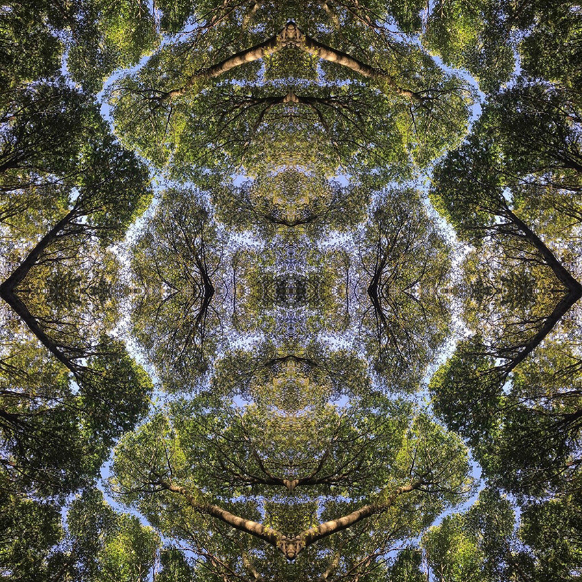 geometree XIV