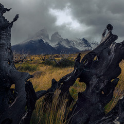 Land of the dead trees