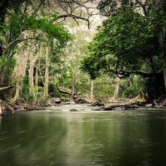 Jungle River