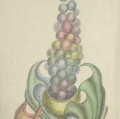 Richard Perry Bedford, Grapes