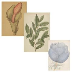 Richard Bedford, preparatory sketches
